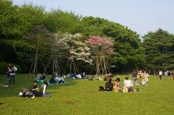 Yogogi Park