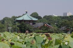 Tokyo12014 043